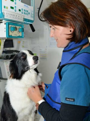 Dogs - General Health and Routine Visits
