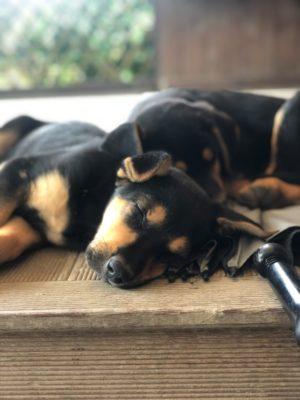 Pups 2