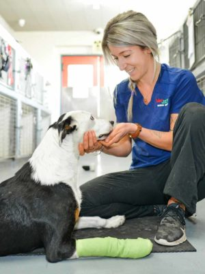 Vet Services - Contact