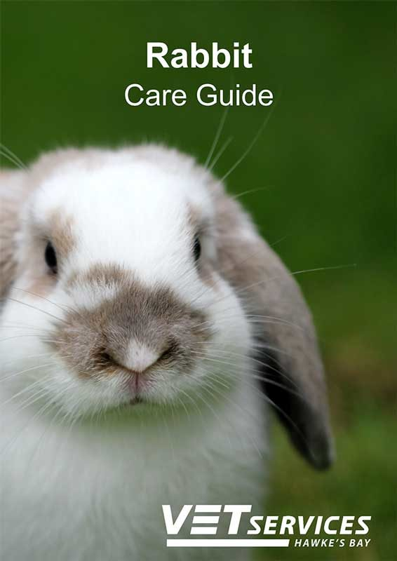 Rabbit Care