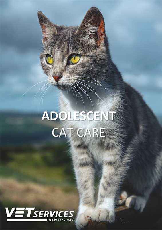 Adolescent Cat Care