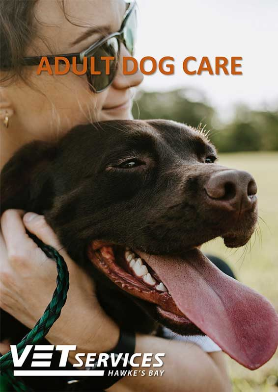 Adult Dog Care